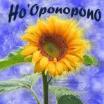 hopono